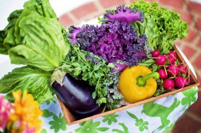 Salat für Cannabisöl